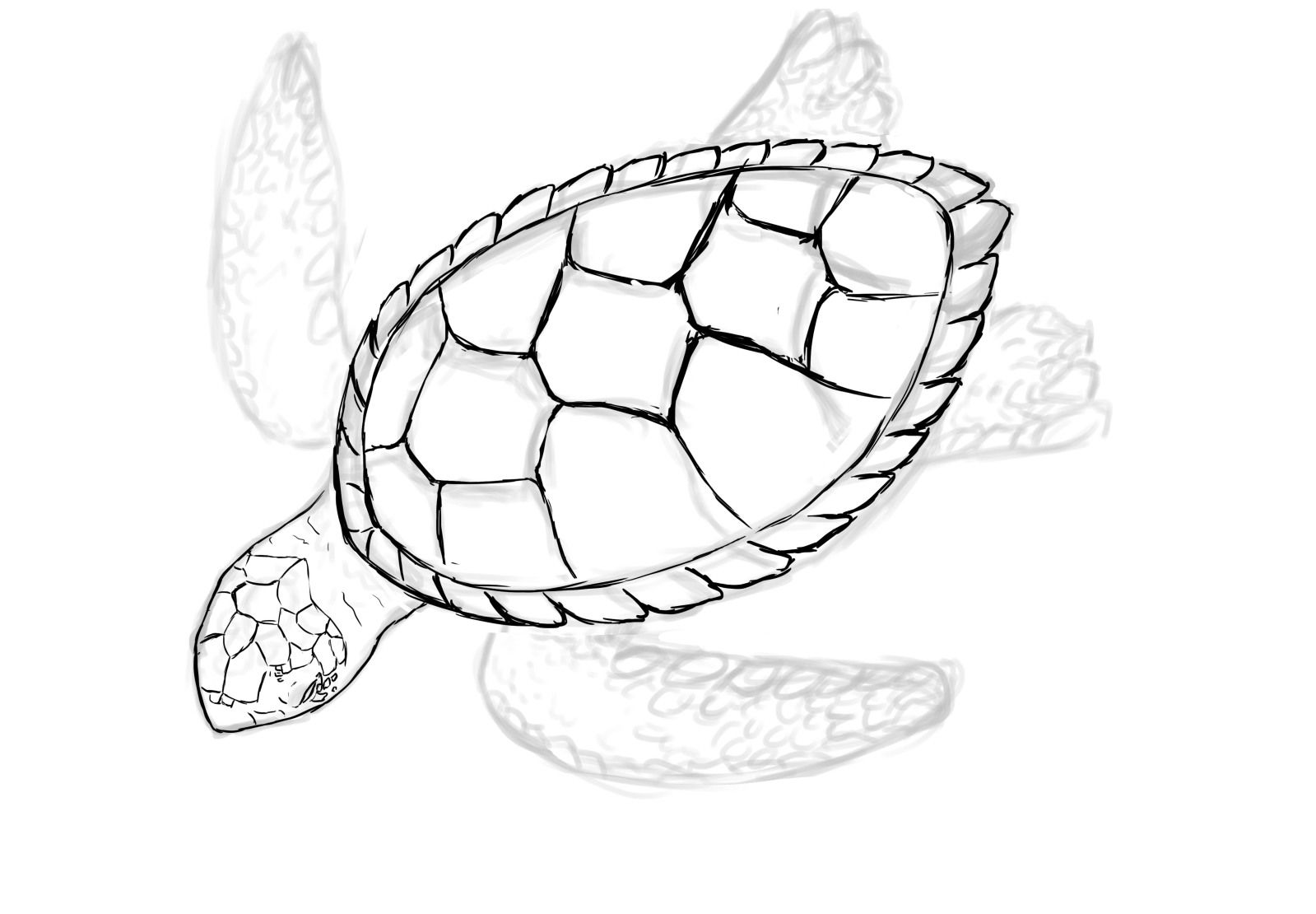 Images For Gt Baby Turtle Sketch Turtle Drawing Sea Turtle