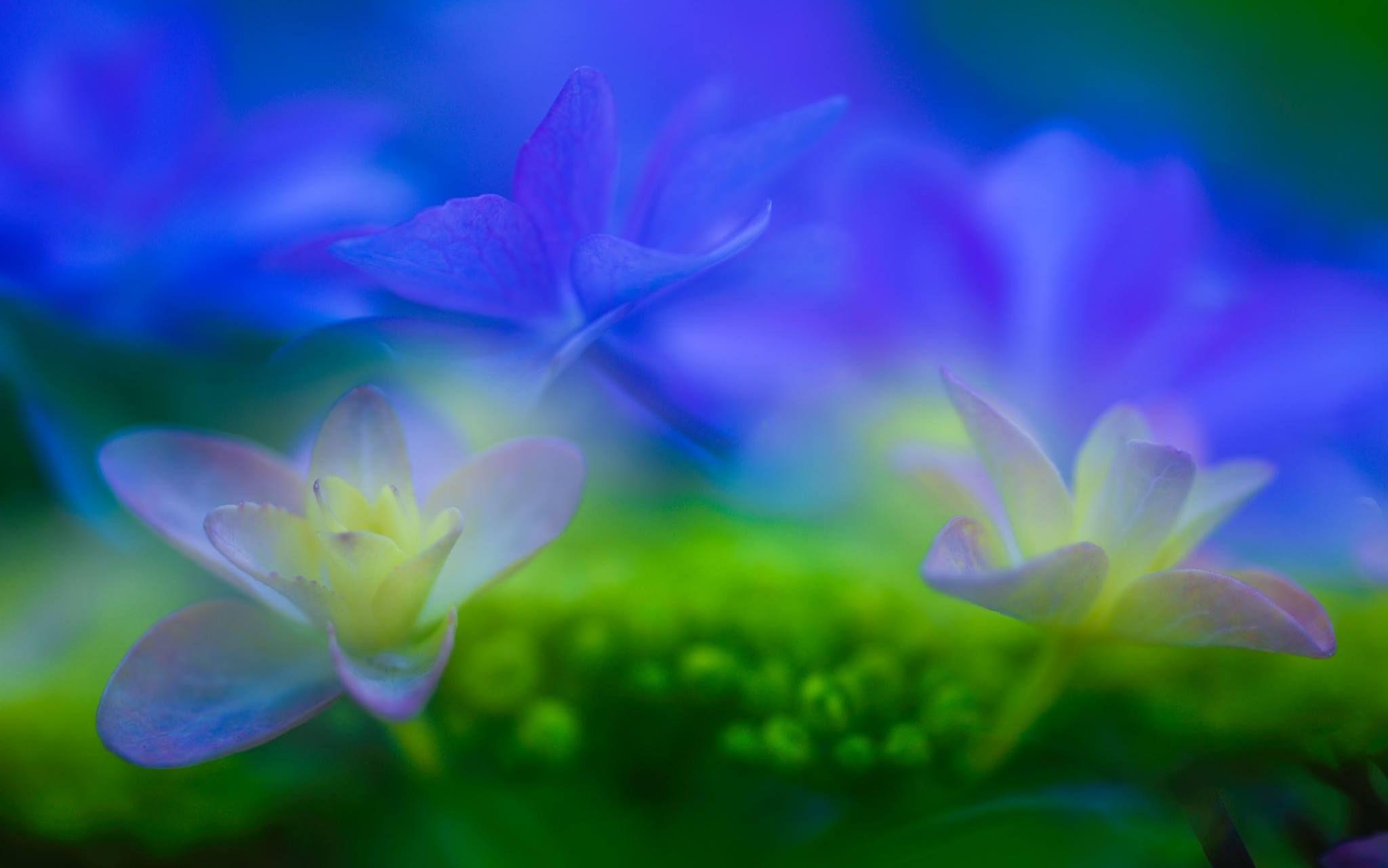 Photo by Yasuo Hirano