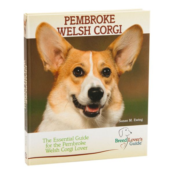 Pembroke Welsh Corgi The Essential Guide For The Pembroke
