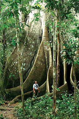 About Naturetours Com Ecotour Amazon River Cruises Com