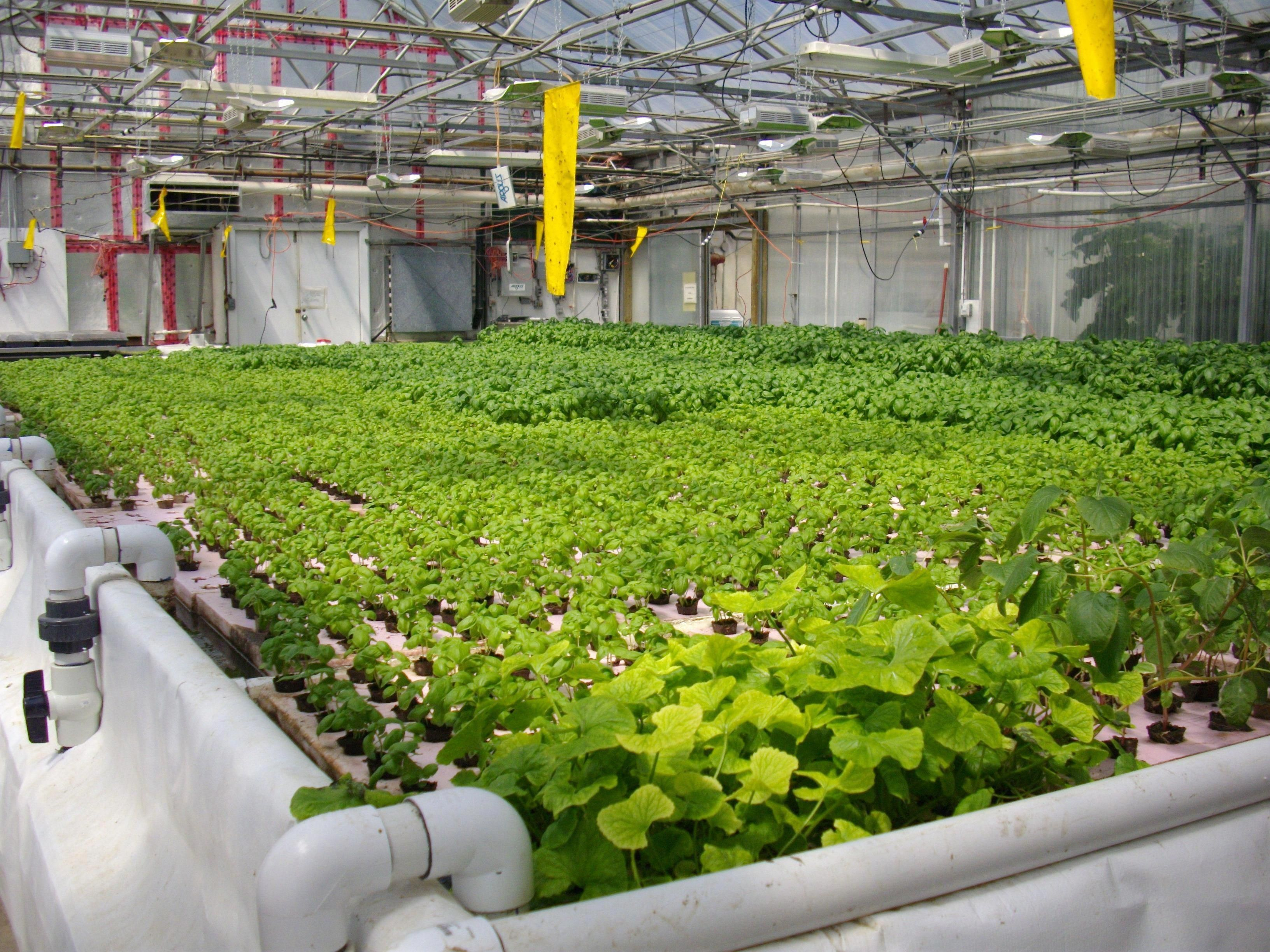 Hydroponic systems are used in residential and commercial