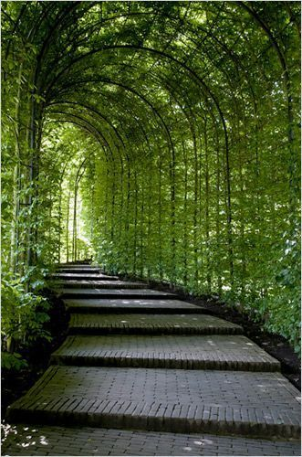 Gorgeous Green Pathway With Overhanging Plants That Shade