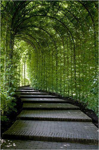 Garden Pathway Landscaping