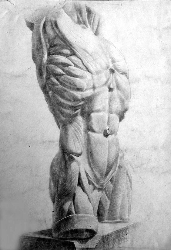 Pin de Sebastián Del Río en Anatomia | Pinterest | Anatomía, Dibujo ...