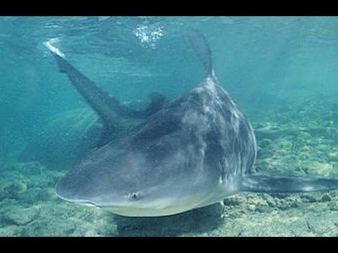 The Fishing Files: Bull sharks spotted in the Mississippi