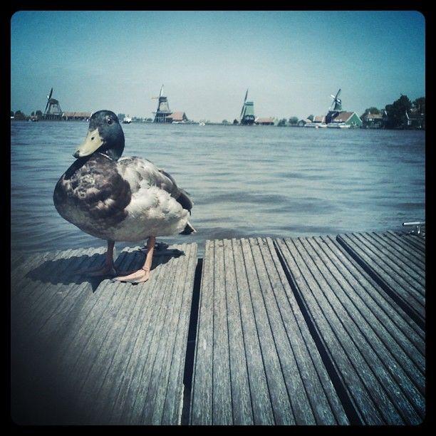 esprifotografeert on Instagrid.me | The Best Way to View Instagram Photos