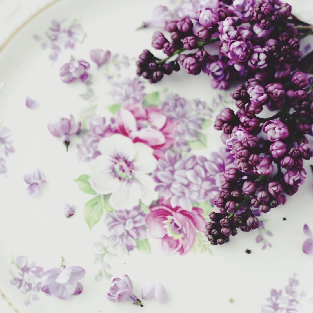 The first and last of the lilac  #flowers #floralfix #flowersofinstagram #vintageplate #floral  #thatsdarling #allthingsbotanical #flowermagic #florist #calledtobecreative #mybeautifulmess #livecreatively #flashesofdelight #photosinbetween #lovelysquares #pursuepretty #pink #lilac #vscoflowers  #makemondaypretty #happyheart  #slowfloralstyle  #stylingtheseasons #ccseasonal #floralfridaycompetition  #petalsandprops #softdreamyphotography #floralperfection