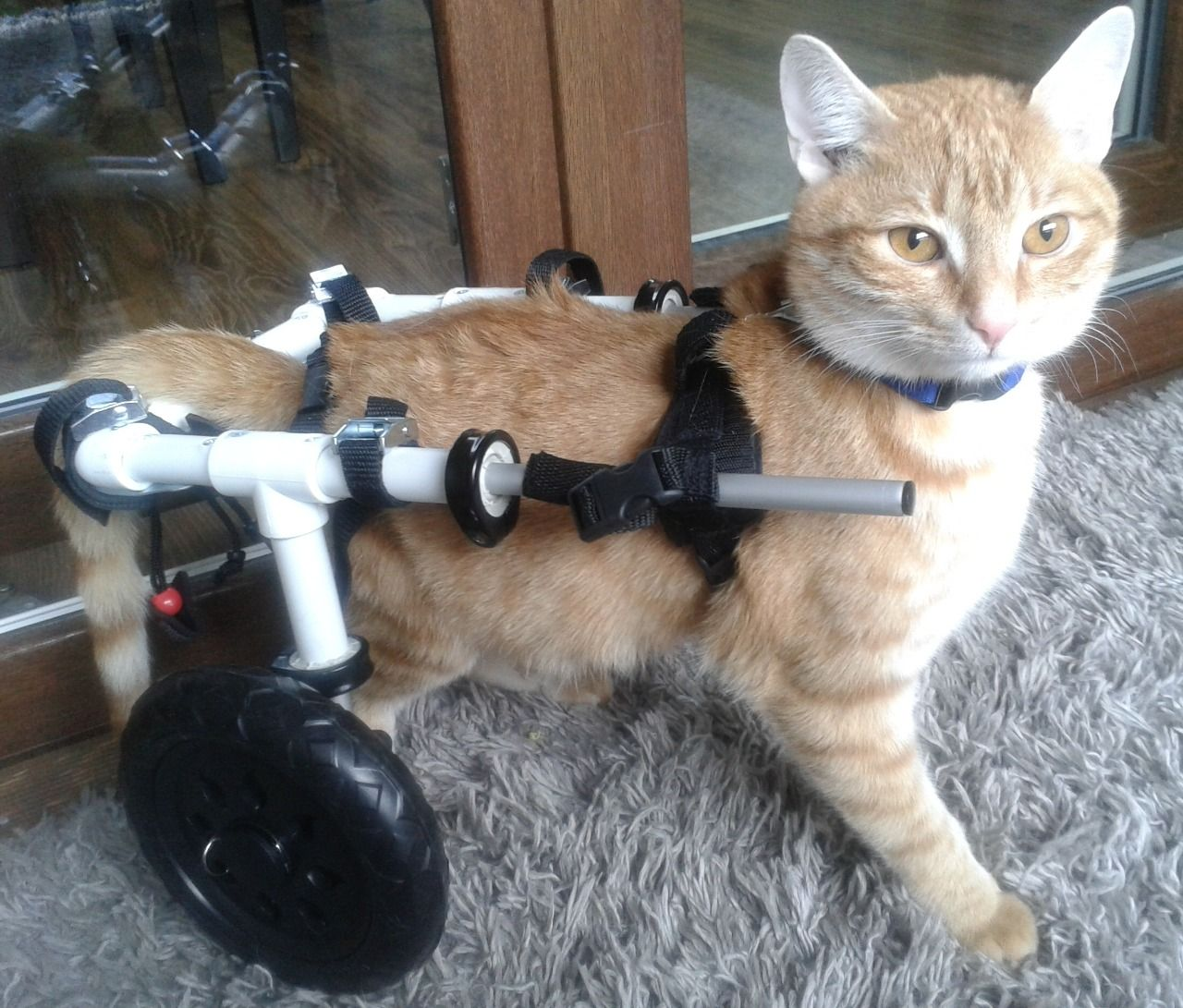 Katzenrollstuhl Cat invalid wheelchair