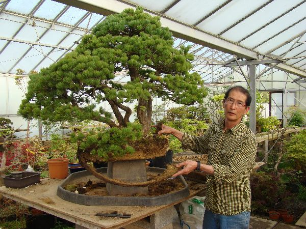 Our Nursery Herons Bonsai