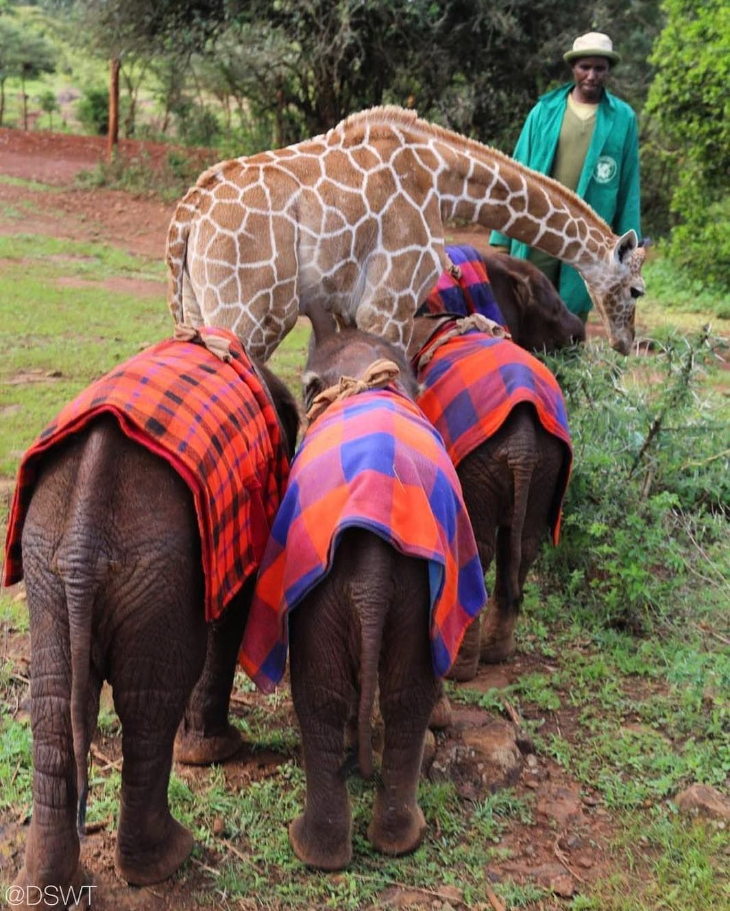 David Sheldrick Wildlife Trust On Instagram As Our Herd Reminds