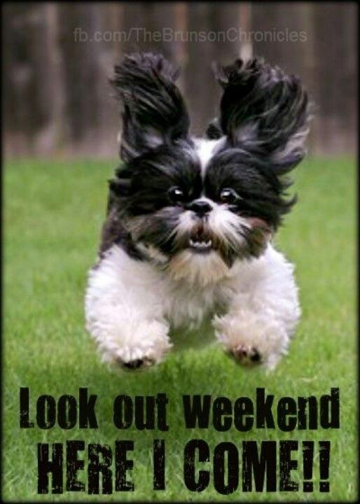 Image result for cute dogs weekend images