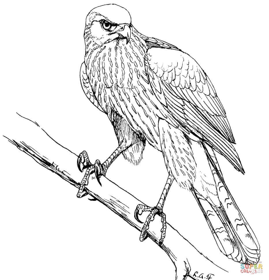 Coopers Hawk Coloring Page Jpg 932 970 Coloring Pages Bird Coloring Pages Color