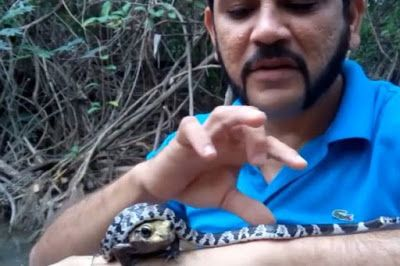 Watch man wrap venomous snake around poisonous frog - then put them both in his mouth