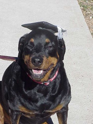 Chinese Rottweiler