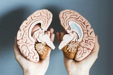 Left Brain Vs Right Brain Dominance Left Brain Right Brain Right Brain Cognitive Psychology
