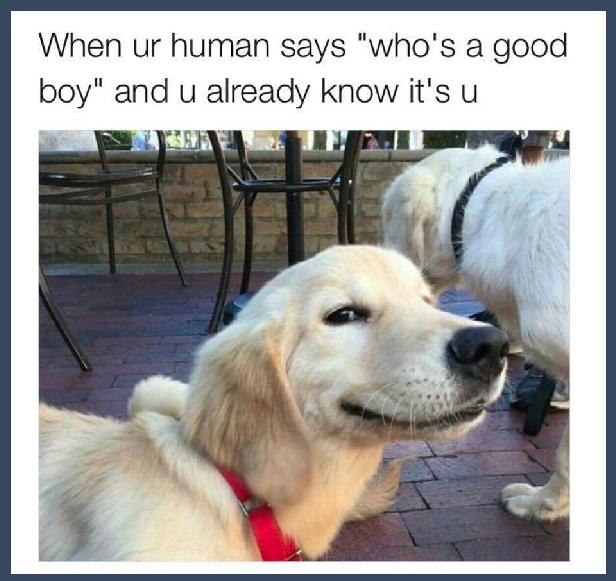 Memes To Make You Smile