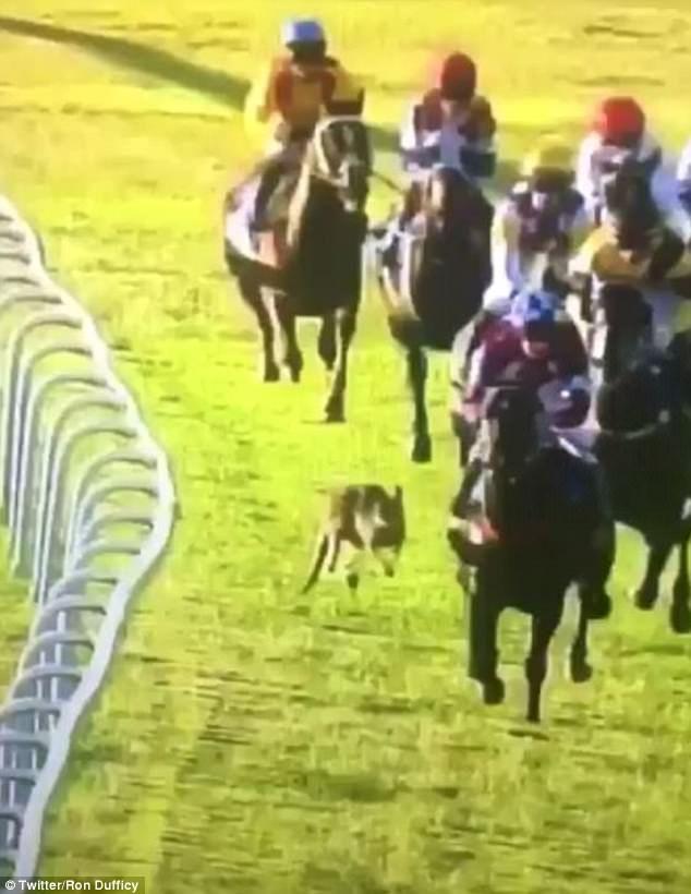 Zebra Vs Horse Speed
