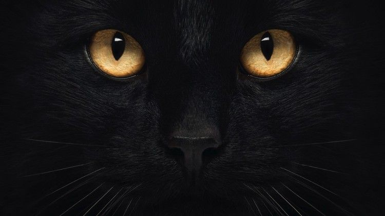 Why Can T Cats Drink Milk Plus 6 Other Feline Myths Bbc Science Focus Magazine Cat Drinking Cats Cats With Big Eyes