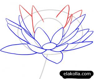 How To Draw A Lotus Water Lily Lilies Drawing Flower Drawing Flower Drawing Tutorials