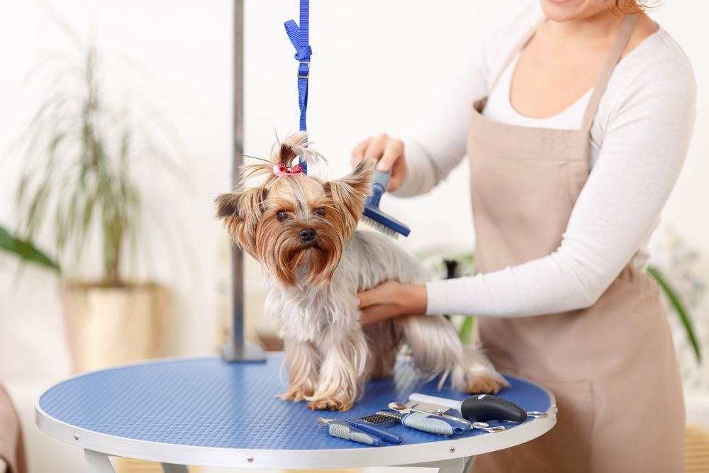 Contact Emergency Vet Near Me Dog Grooming Pet Grooming Pet Groomers
