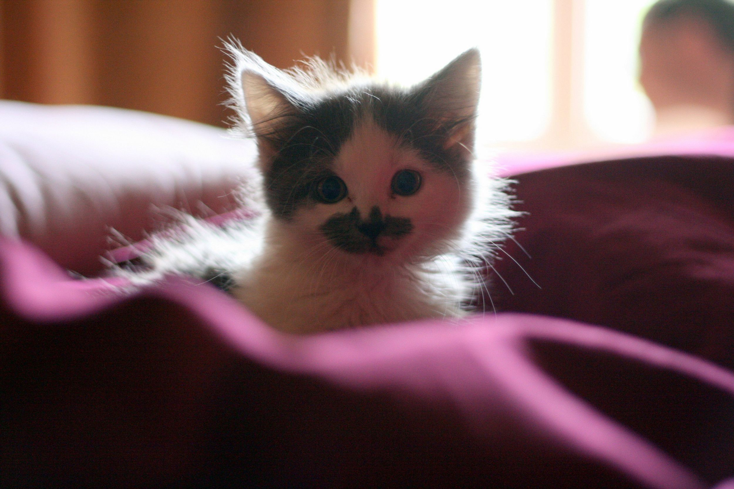 16 Kitten Photos That Are Too Cute For Words Feline Panleukopenia Kittens Cutest Funny Cute Cats