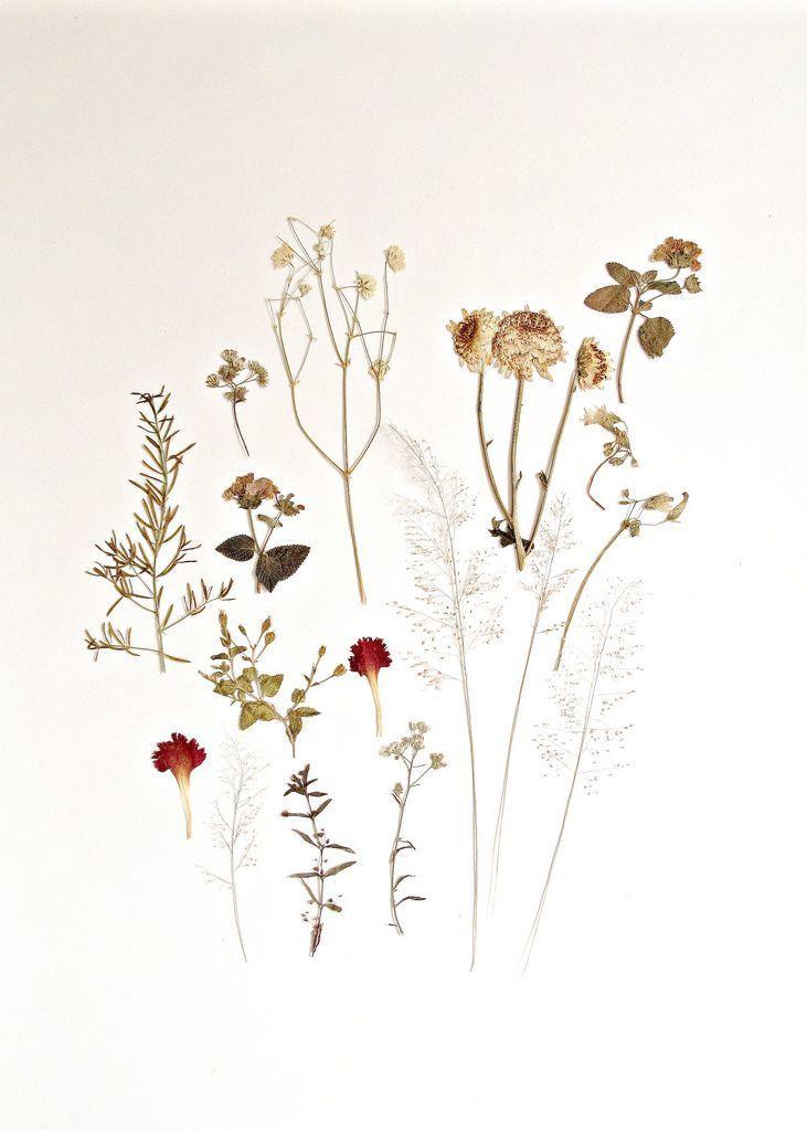 Untitled Pressed Flowers Flower Art Dried Flowers