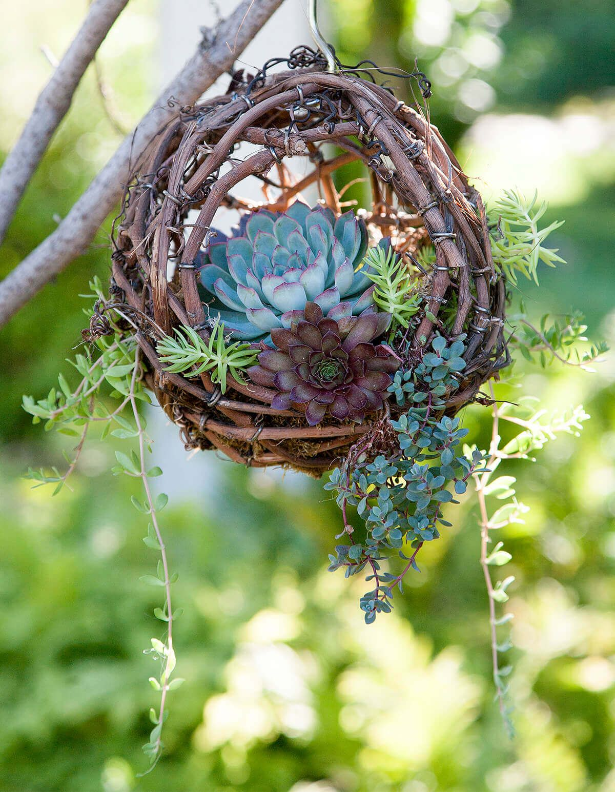 Photo of Hanging Grapevine Bird's Nest Succulent Planter