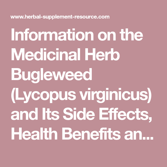Bugleweed – Health Benefits and Side Effects | Herbal ...
