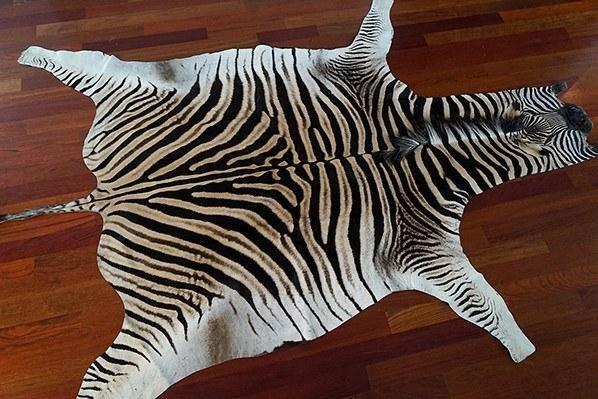 No Felt Zebra Skin Rug Grade A 13 In 2019