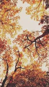 Image Result For Autumn Wallpaper Tumblr Fall Wallpaper Autumn Aesthetic Tumblr Iphone Wallpaper Fall