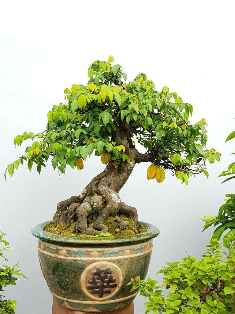 Bonsaitreesinspiration Bonsai Tree Care Bonsai Art Bonsai Tree