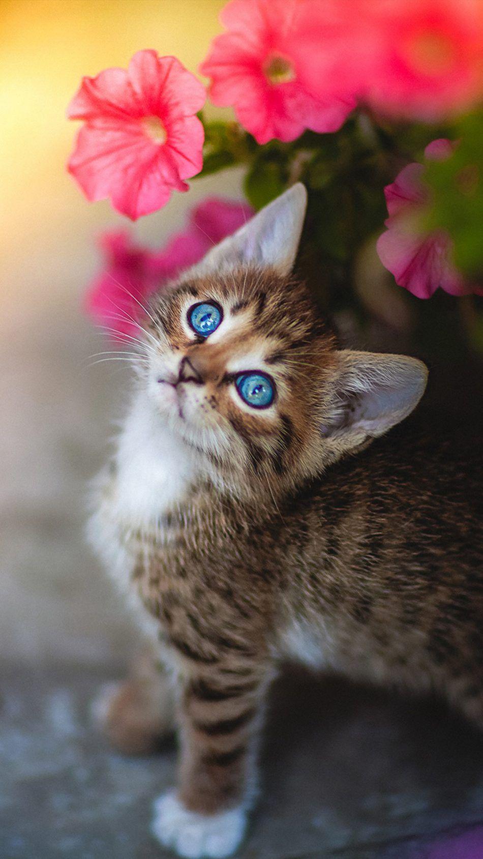 Cute Kitten Blue Eyes Flower 4k Ultra Hd Mobile Wallpaper Kittens Cutest Baby Cats Kitten Wallpaper