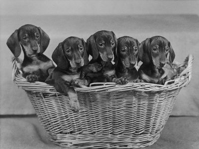 Nothing says I love you like a basket of wieners!