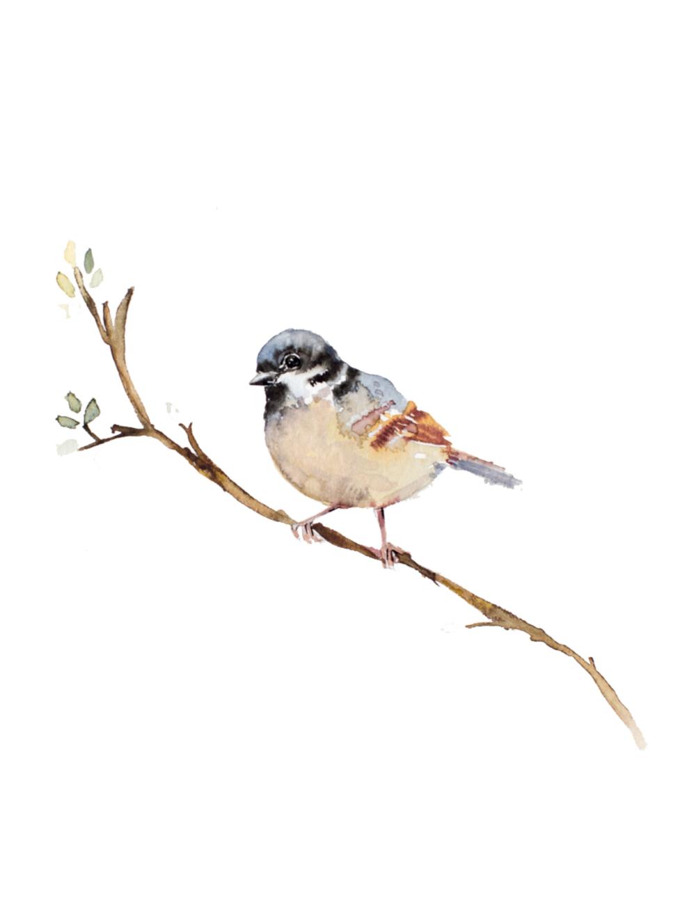 Spring Bird - Free Watercolor Printable