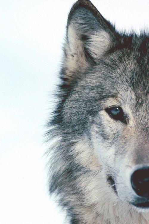 Tiererkenntnis - Kelly Blog #wildanimals