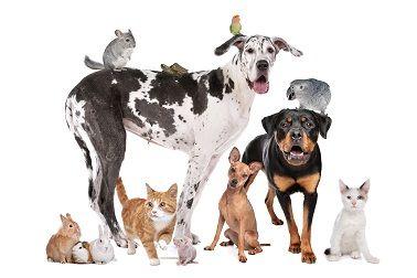 National Pet Month Pet Day Animals Pets
