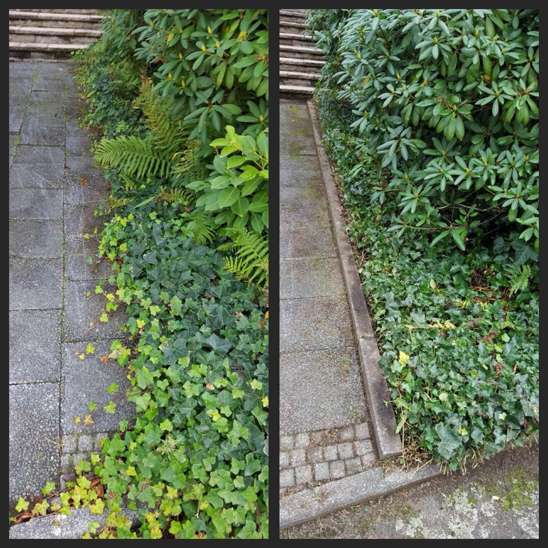 Eingang Frei Bitte Unkraut Schnitt Garten Gartner Overath Garten Anlegen Garten Unkraut