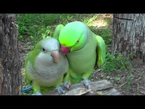 Creepy Or Cute This Bird Practices The Art Of Seduction Funny Parrots Funny Birds Parrot