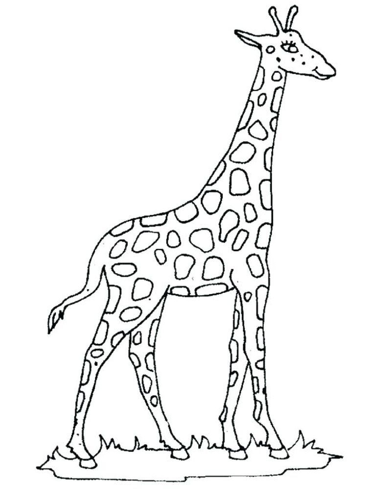 Realistic Giraffe Coloring Pages Below Is A Collection Of Giraffe Coloring Page Which You Can Download Giraffe Colors Giraffe Coloring Pages Giraffe Pictures