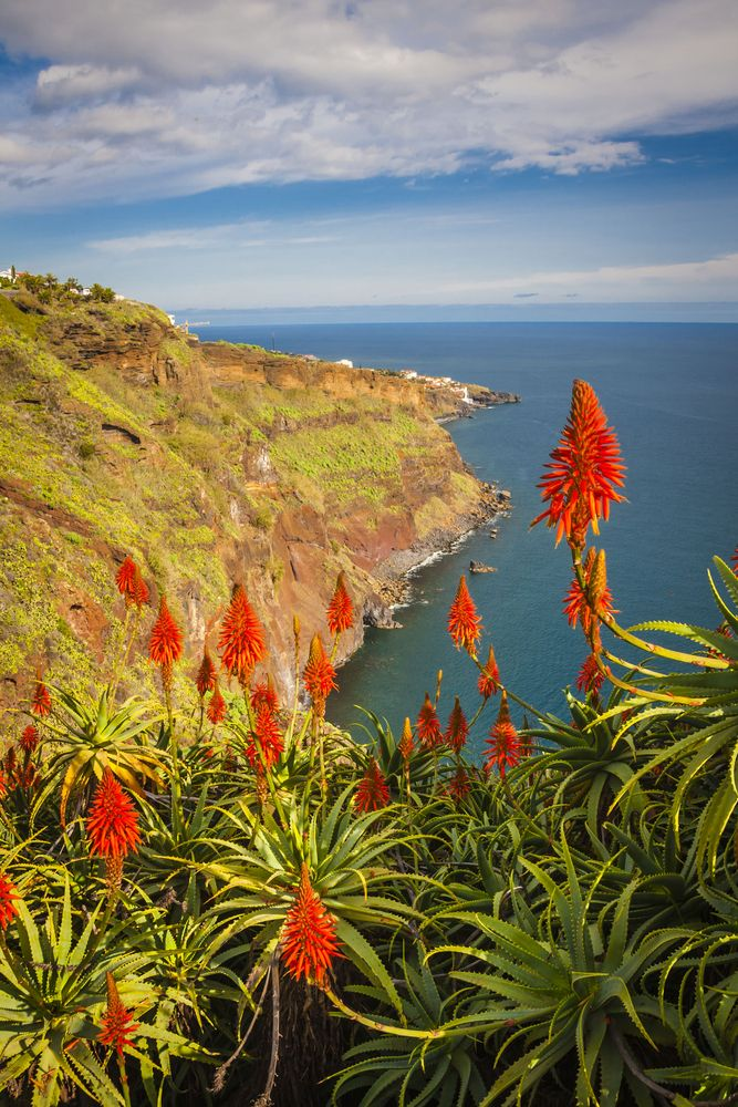 A Day on the Island of Madeira