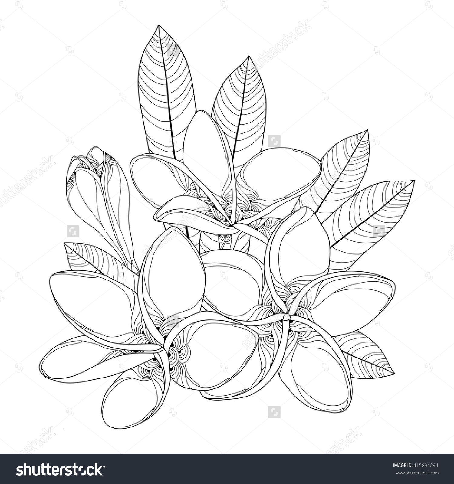 Coloring pages of flower buds - Stock Vector Bouquet With Ornate Plumeria Or Frangipani