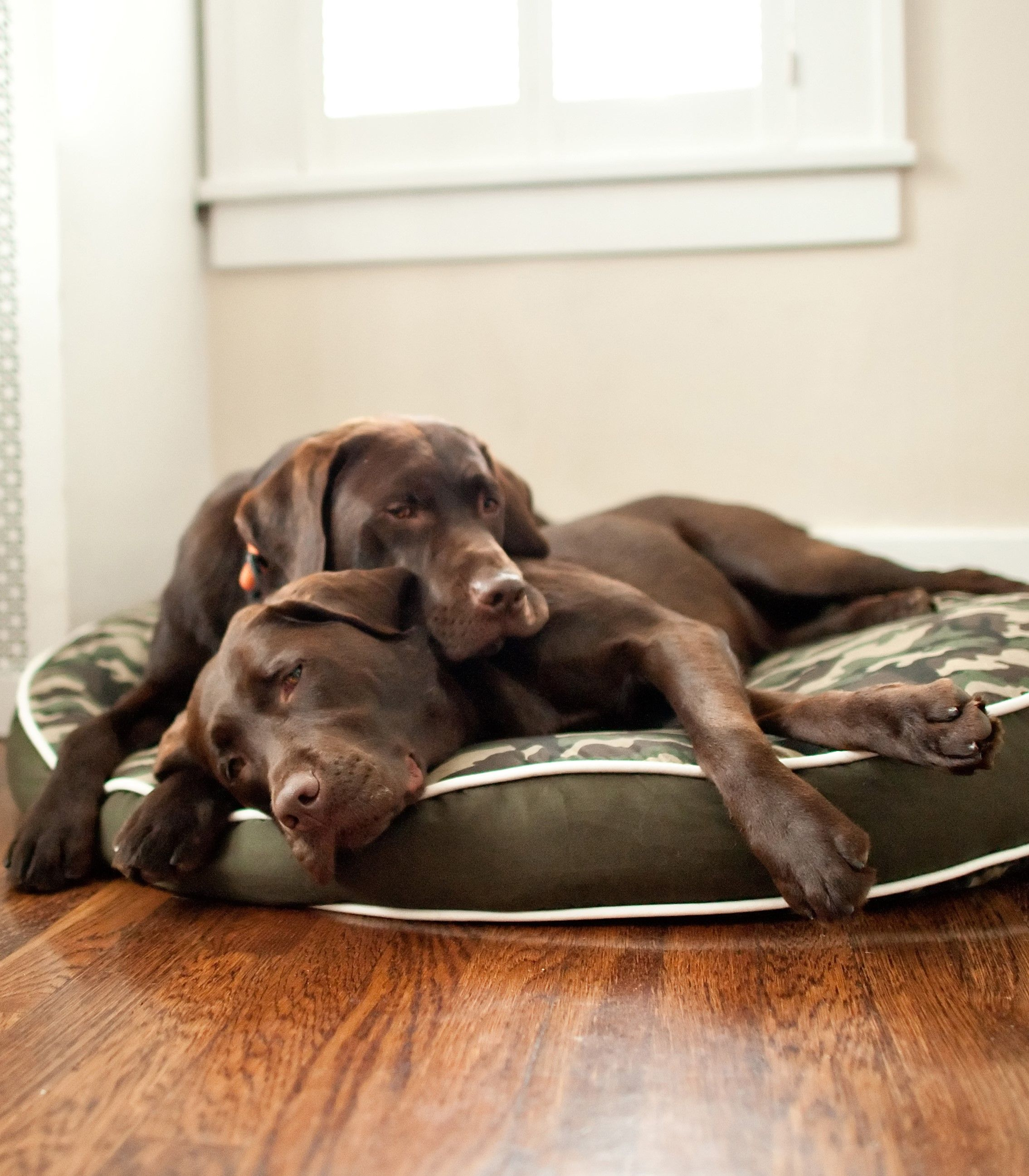 Two Dogs Are Better Than One This Standard Round Dog Bed Was Made In A Clic Camo Print That Has Way Of Ing Right No Matter Where It Is