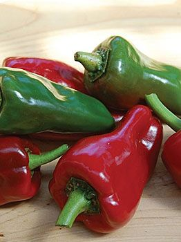 Piquillo Hot Pepper-65-80 days (heirloom, organic)