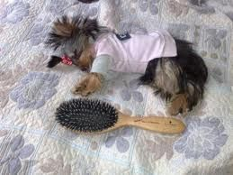getting groomed and dressed is oh so tiring