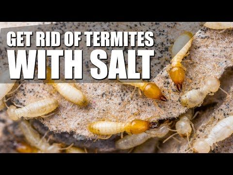 7171ba7665d81a57f1ab1444629b1cc7 - How To Get Rid Of Termites Permanently At Home