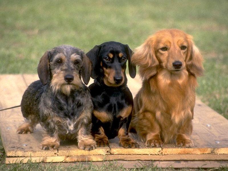 Cani da compagnia: quali comprare? gossip cani da compagnia