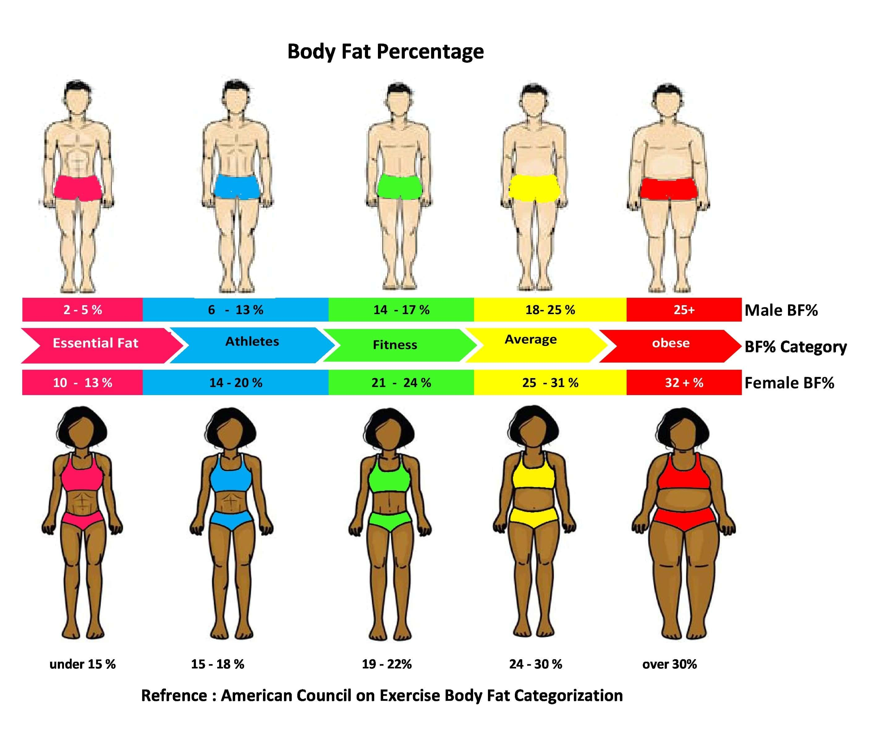 Pin On Body Fat Percentage