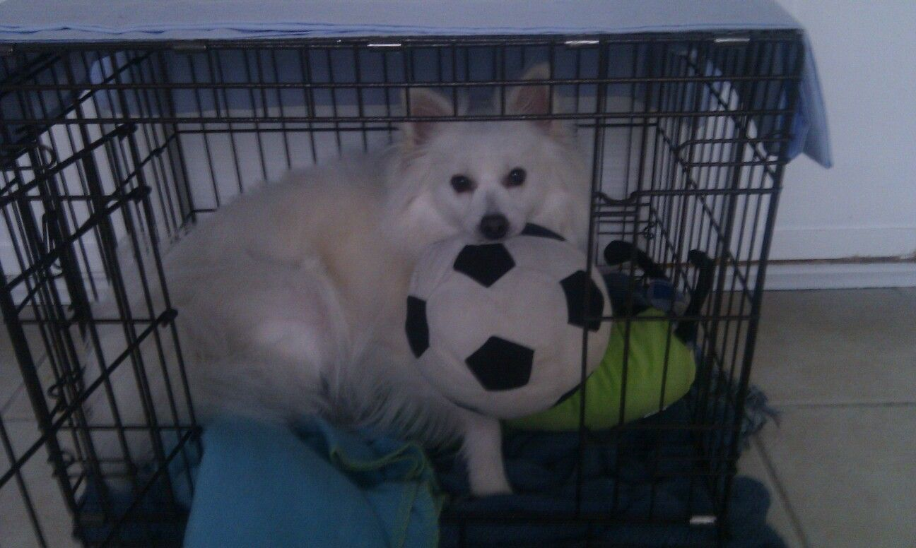 Wants the big toys in the crate