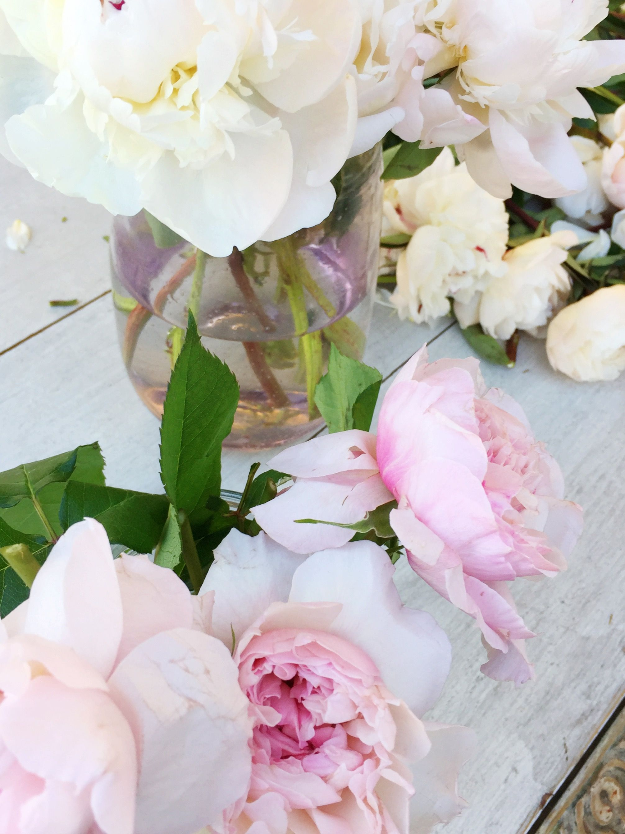 Pretty Pink And White Peonies Flowers Pinterest White Peonies