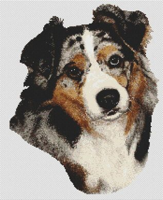 Australian Shepherd Cross Stitch Pattern Ii Blue Merle